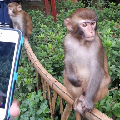Monkeys of ZhangJiaJie National Park