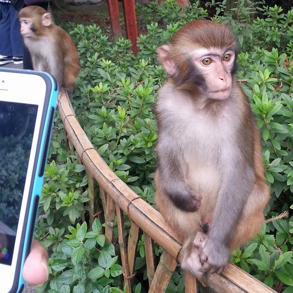 Monkeys of ZhangJiaJie National Park