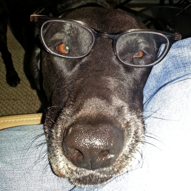 Angus with glasses